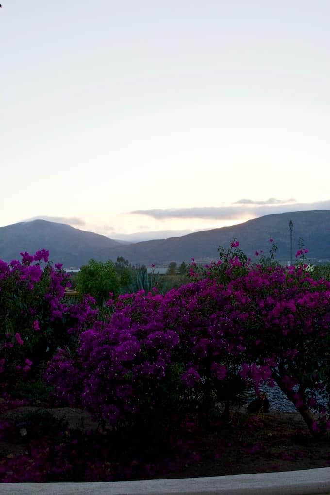 Vamonos: Baja California