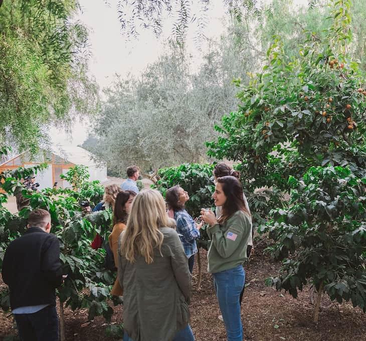 Coffe and tropical fruits growing at Frinj Coffee + Good Land Organics in Santa Barbara, CA.