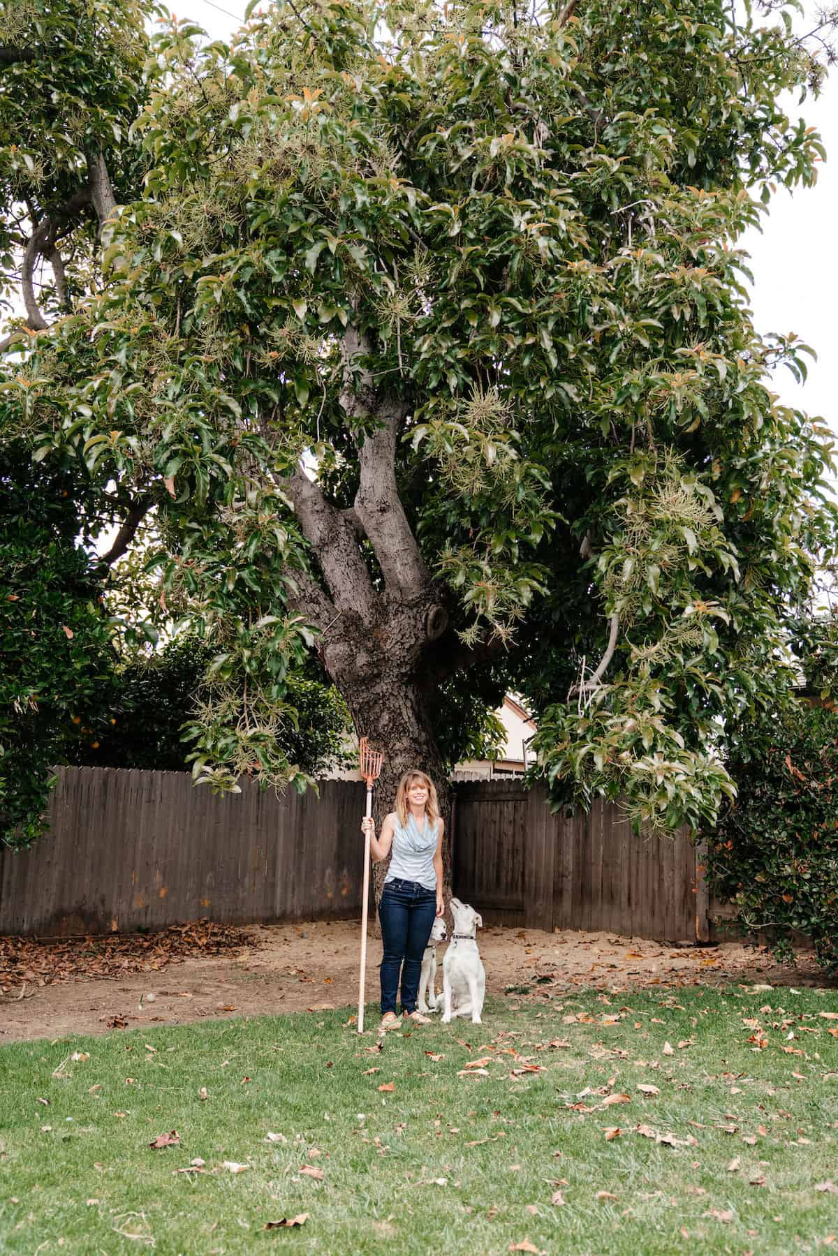 Woman standing next to a white dog under a large avocado tree.
